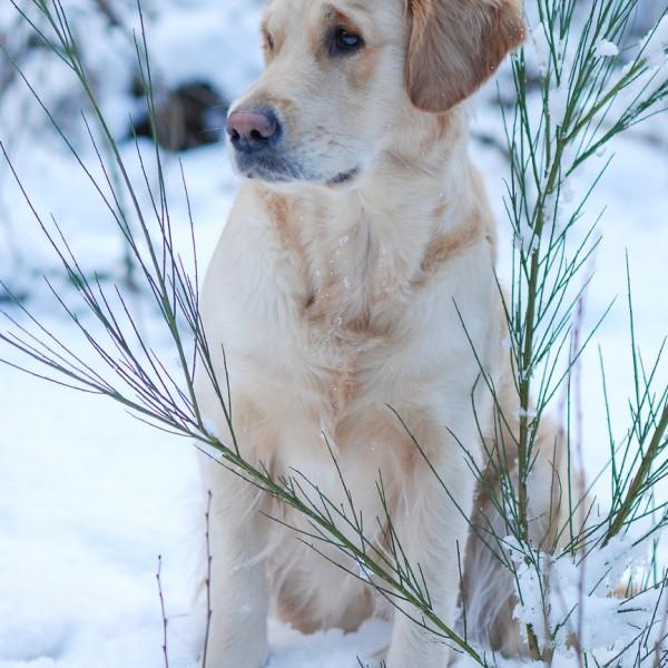 Schneetreiben_3