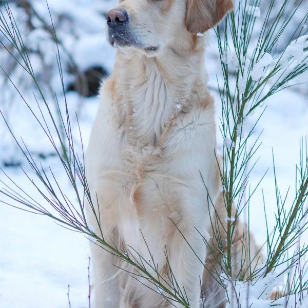 Schneetreiben_4