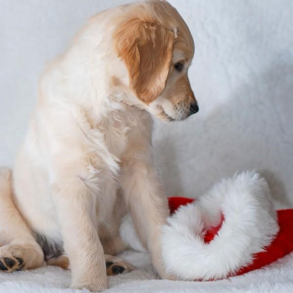 Weihnachtszeit_10