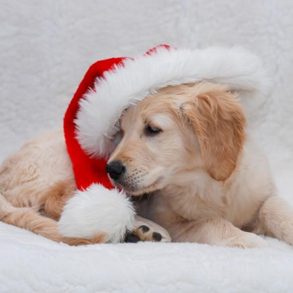 Weihnachtszeit_11
