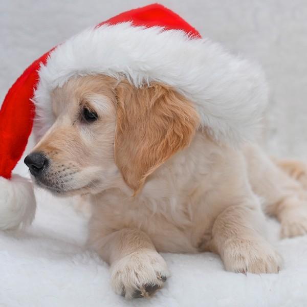 Weihnachtszeit_3