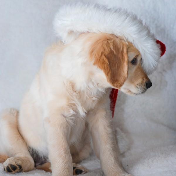 Weihnachtszeit_9