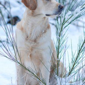 Schneetreiben_1