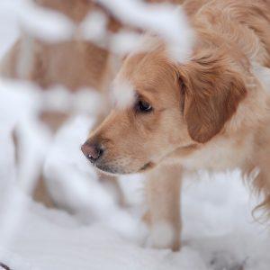 Schneetreiben_6