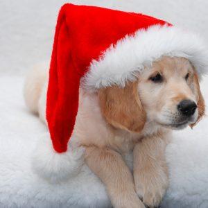 Weihnachtszeit_5