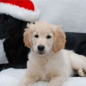 Weihnachtszeit_8