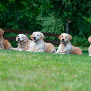 Aiven, Fleur, Maelle, Luna und Floyd